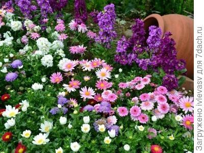 http://flowers.kartinki-i-oboi.ru/user-content/uploads/wall/mid/45/look.com.ua-18726.jpg