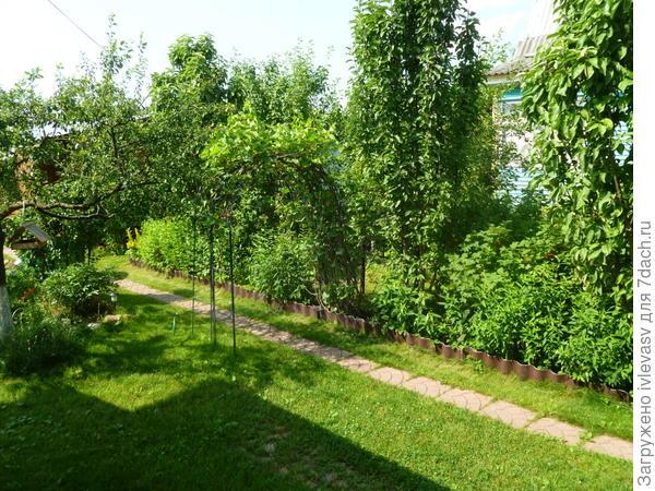 Уголок для ягодных кустарников