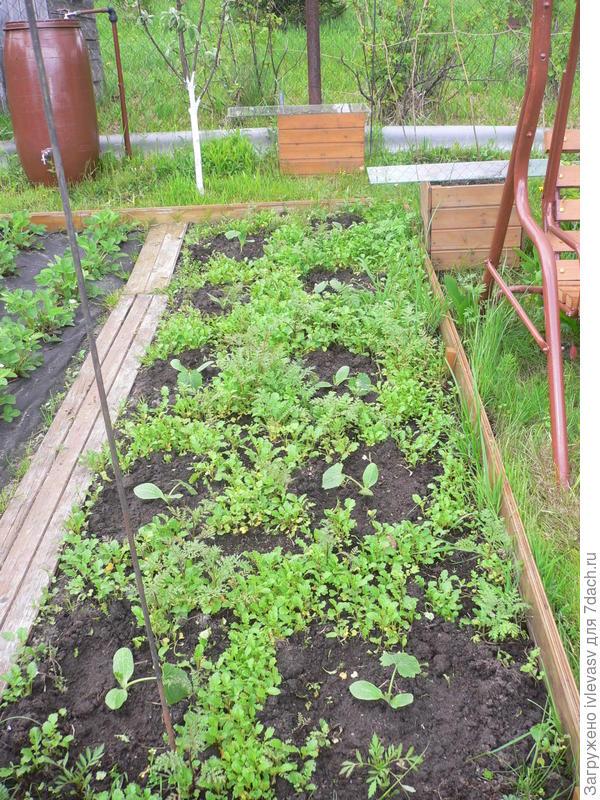 Огородик для полива, если подключить шланг можно и газон поливать