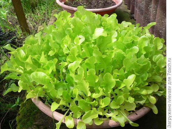 Салат в тазике