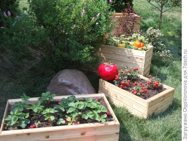 Идея для мини-огорода