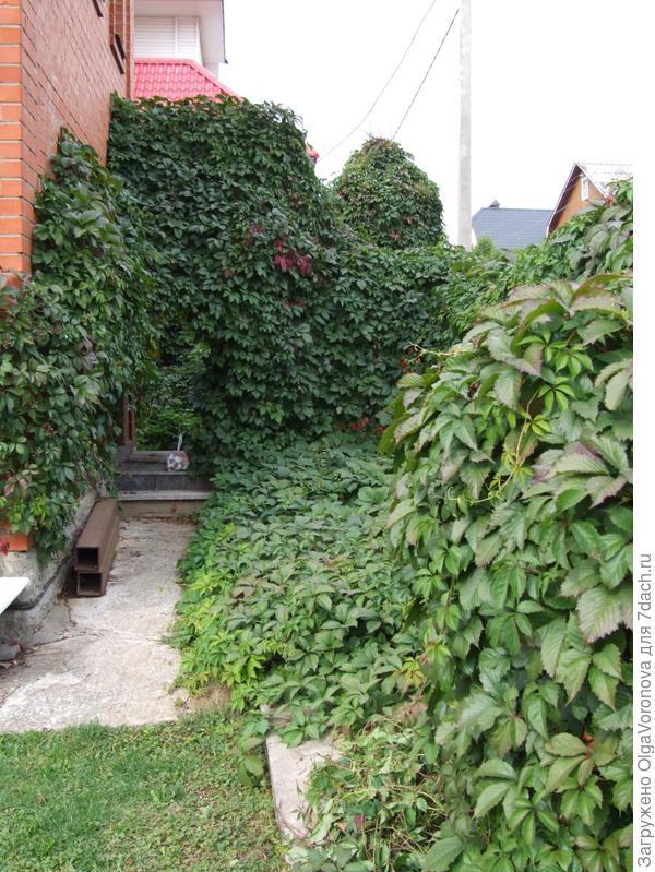 Одно вертикальное озеленение не создаёт структуру сада