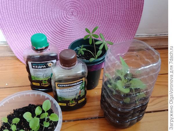 Каким растениям пикировка противопоказана