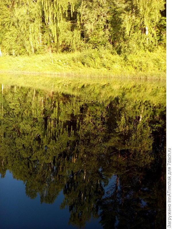 отражение леса в реке