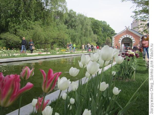 На свежем воздухе 95% цветов - были тюльпанами. Завтра ожидаем похолодания