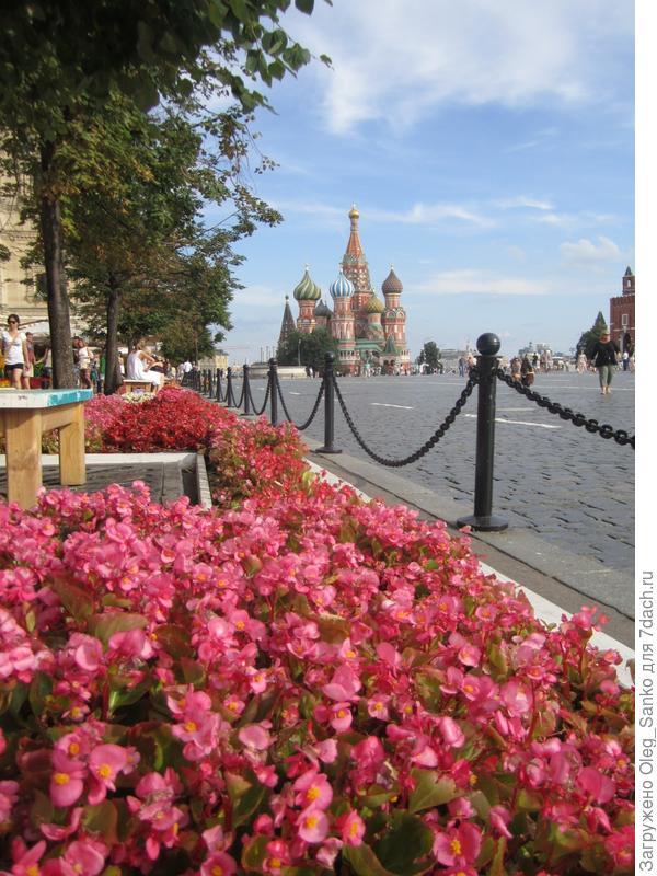 Цветочное красное  обрамление Красной площади