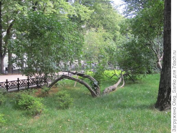 Подскажите пожалуйста, как называется это дерево?