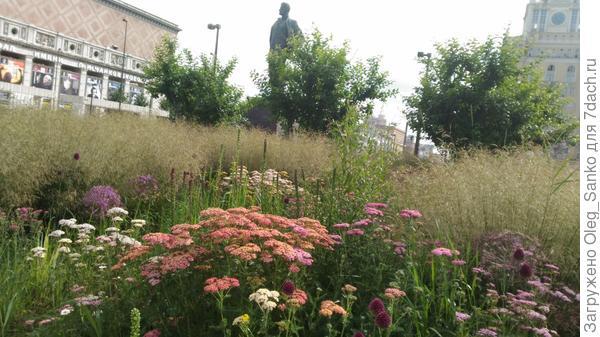 Луговые цветы окружили памятник Владимиру Маяковскому