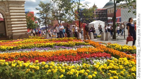 Традиционно ГУМ стал главной жемчужиной цветочного фестиваля