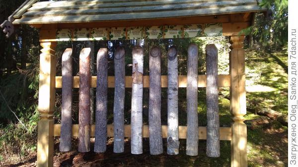 Чаще встречающиеся типы древесины в средней полосе России.