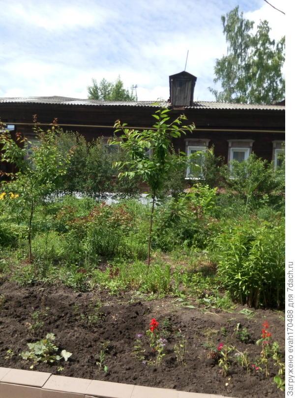 Слева- небольшое деревце -абрикос, справа-черешня.