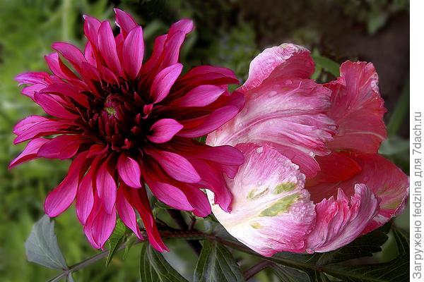 Рядом осень и весна – бывают в жизни чудеса!