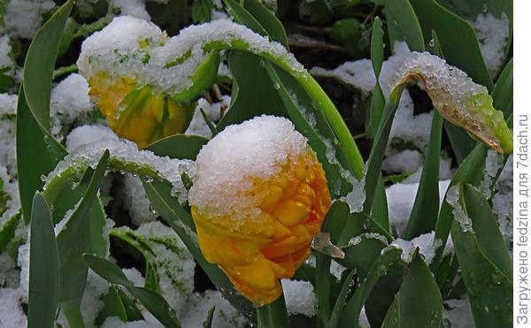 В мире заснеженной весны