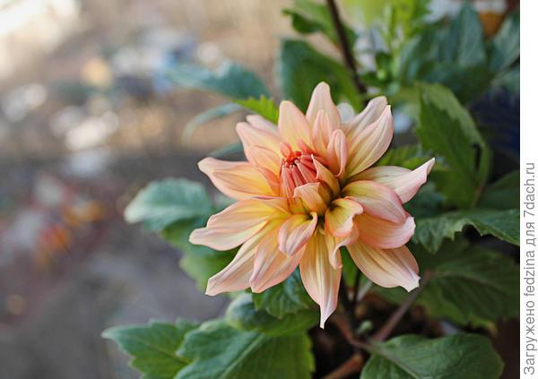 Цветение в апреле на балконе