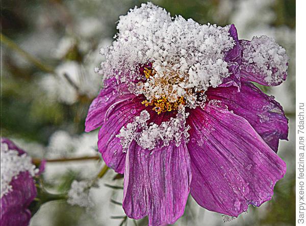 Космос в снежной шапочке