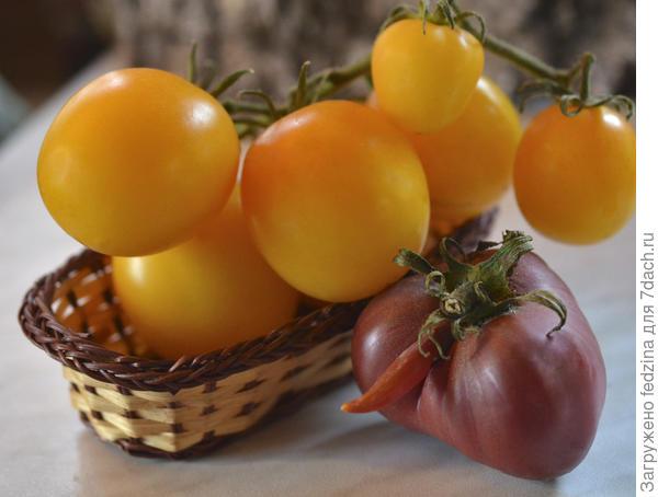 Томат Золотые яйца характеристика и описание сорта с фото