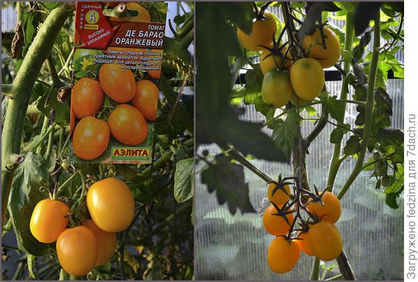 Де Барао оранжевый, фирма Аэлита
