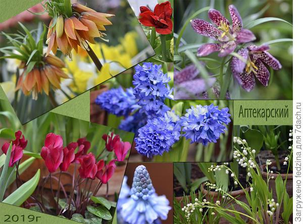 Цветы в Аптекарском