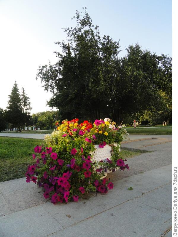 Много в центре города вот таких цветничков