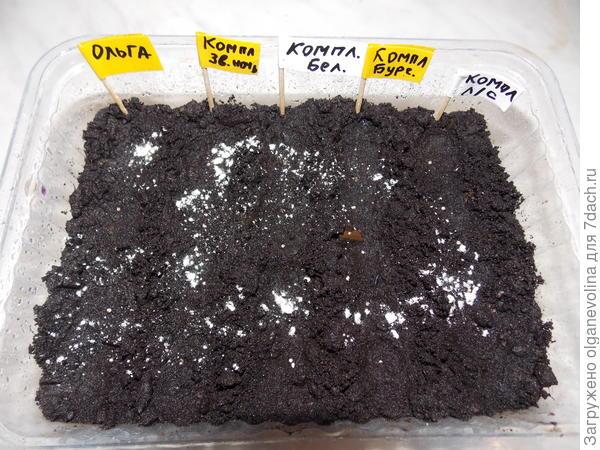 Дражированные семена в грунте смочила из опрыскивателя раствором НВ-101 (2 капли на 1л воды), затем припудрила фитоспорином.