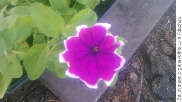 Ольга. Очень красивый цвет.