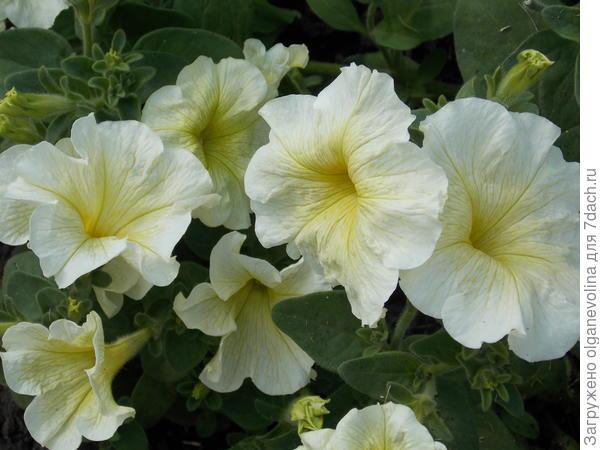 Цветы для радости и восхищения!