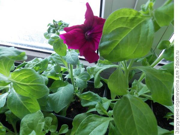Первый цветок!