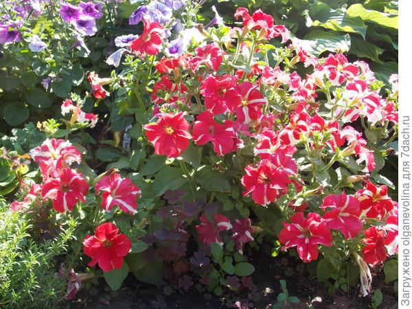 Ярче этих цветов у меня нет ничего!