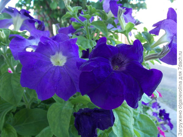 Удивительной красоты цветы!