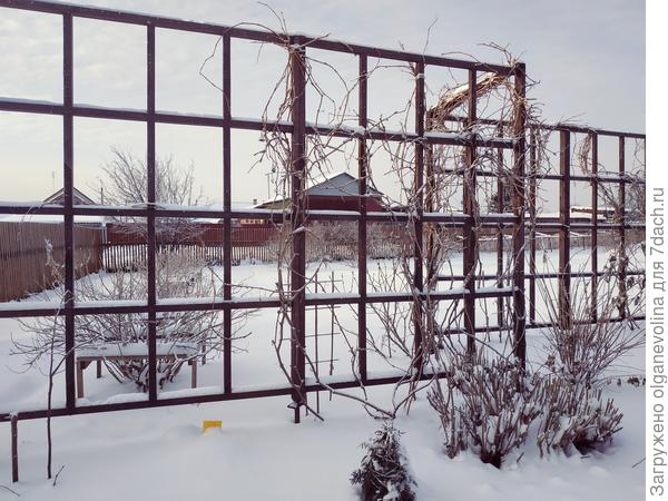 Сад притих в снежном плену.