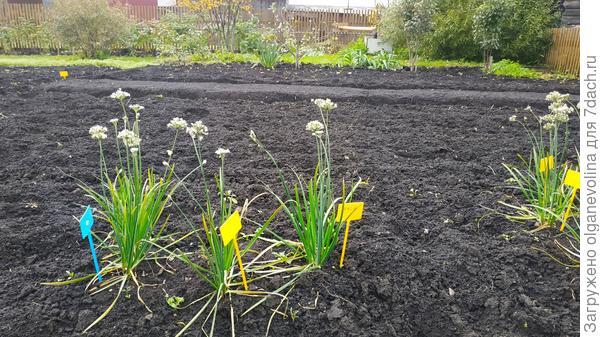 Огород готов к зиме. Можно подводить итоги сезона.