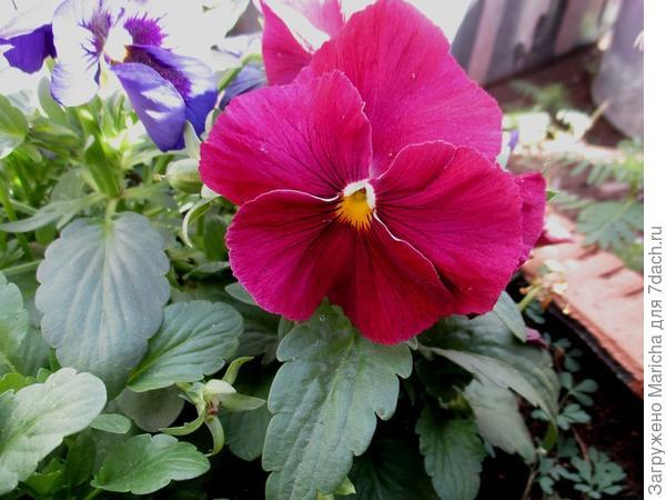 Расцветка со штрихами