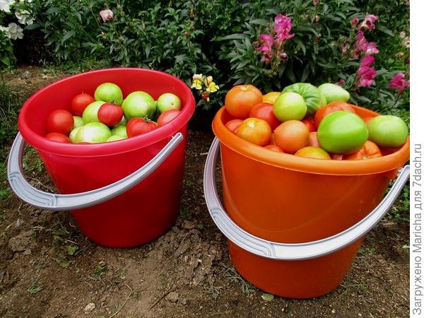 Урожай собранный с пяти кустов