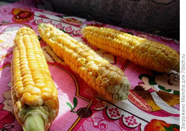Урожай кукурузы Золотой початок