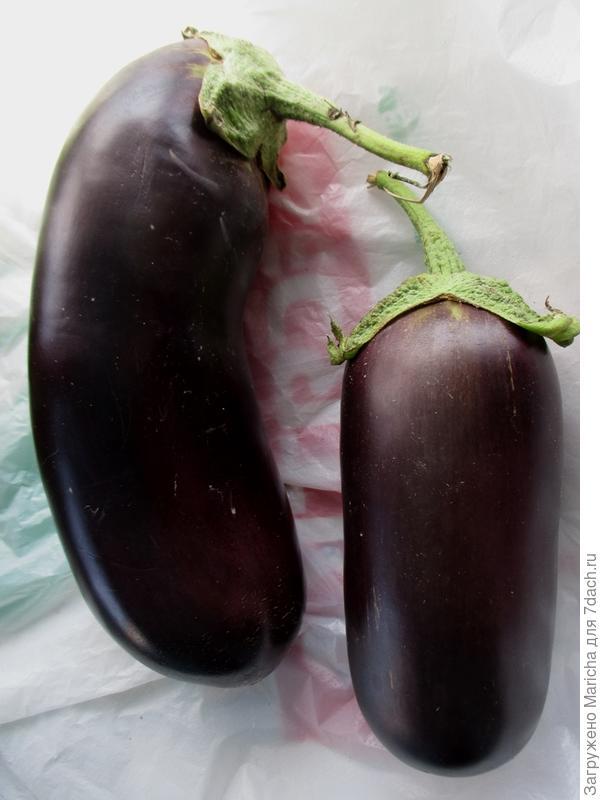 Плоды баклажана Валентина