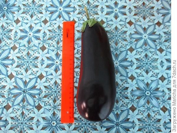 Измерение длины плода