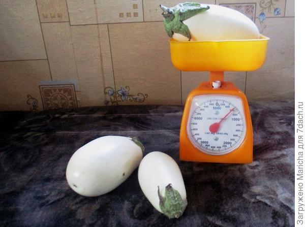 Вес Бибо - 600 гр.