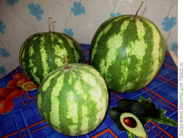 Плоды арбуза  сорт Кримсон Свит