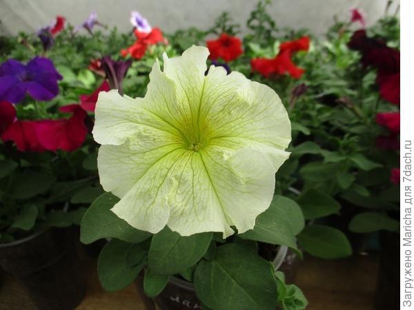 Первый цветок. 13 мая