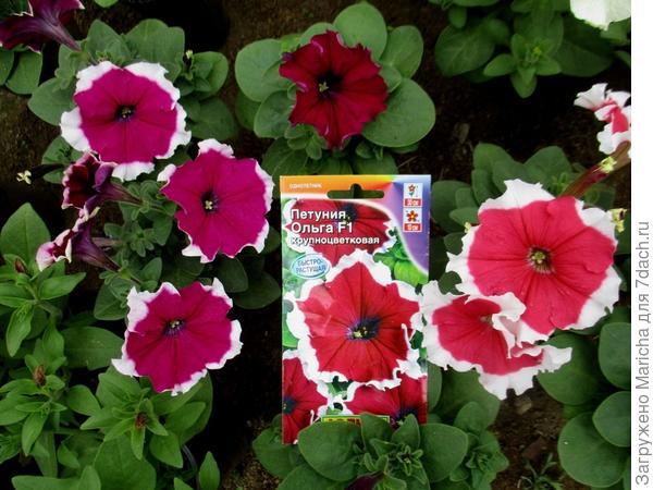 Сравнение цветов в фотографией на упаковке