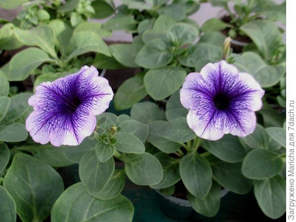 Первые цветы. 9 мая
