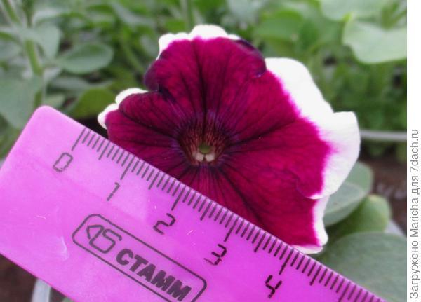 Размер цветка. 10 мая