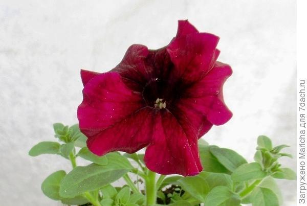 Первый цветок. 4 мая