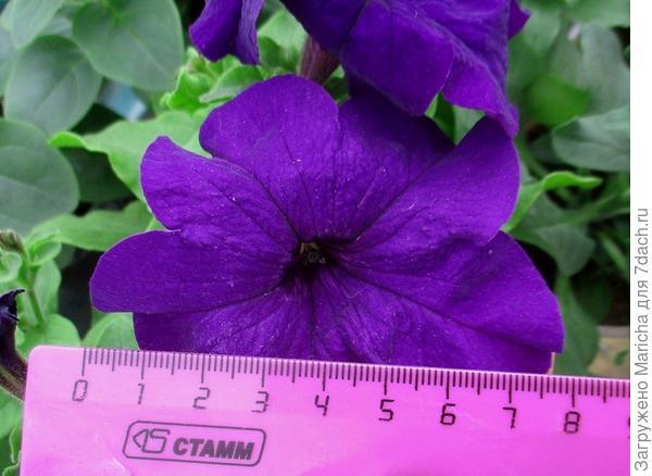 Размер цветка. 11 мая