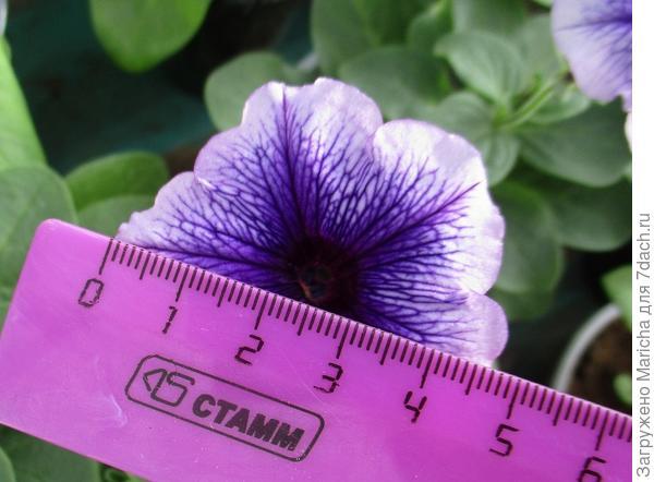 Размер цветка. 9 мая