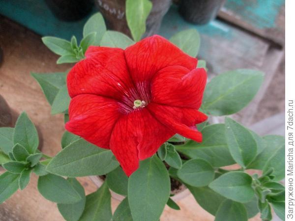 Первый цветок. 10 мая