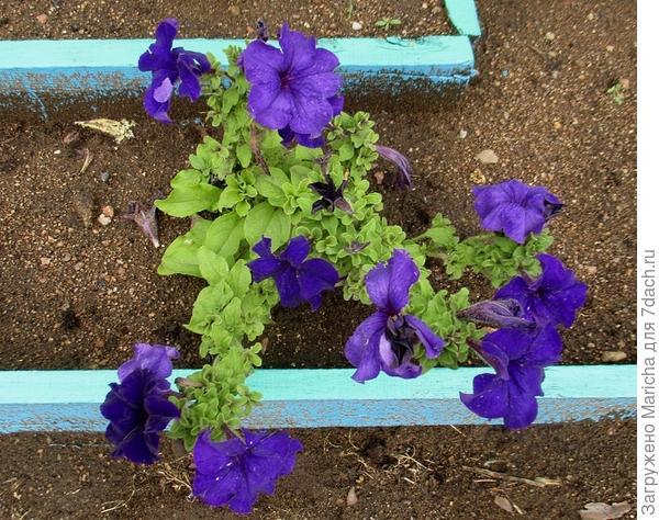 Испорченные цветы