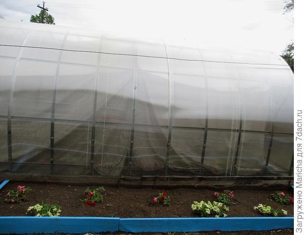 После дождя. 6 июля