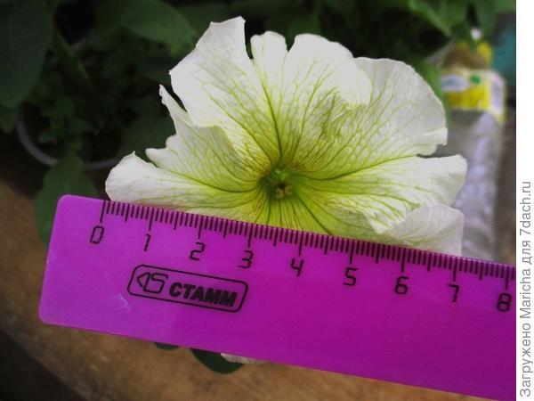 Первоначальный размер цветка