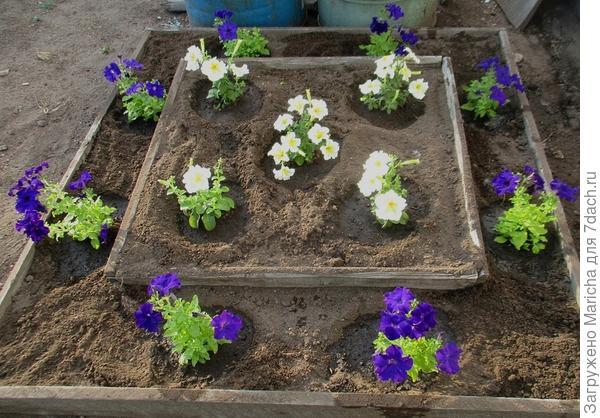 Пять растений высажены в клумбу (верхний ярус)